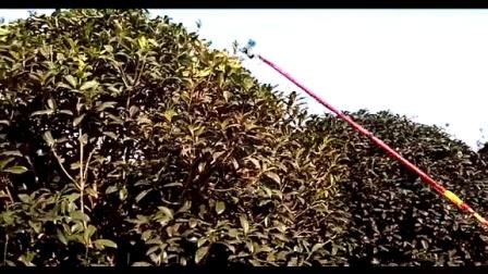 金华延平直流12V3米伸缩电动高枝剪 高枝锯 桂花剪 果树剪 苗木剪 园林剪 高枝锯 桂花剪 修枝剪 园艺剪
