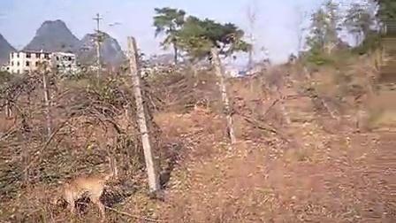 蛇纹四广西河池猎犬猎猫冷骚30分钟2