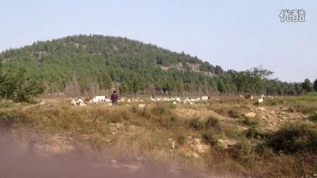 枣庄山羊牧场