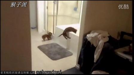 【猴子派】搞笑汪星人不愿意洗澡集锦