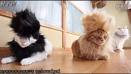 【猴子派】猫叔的新造型 看似喵星人的洗剪吹
