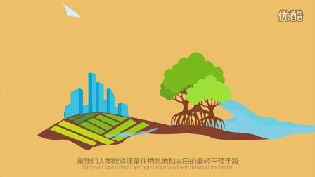 CMCN原创动画:百秒认识红树林