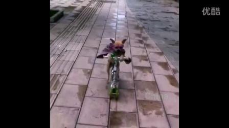 会用滑板的小狗