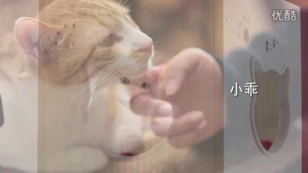 """流浪猫的家——""""喵星球""""咖啡屋"""