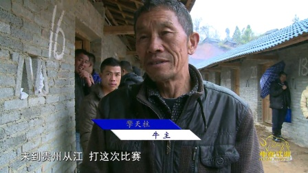 牛在江湖第34期 2015年归江斗牛现场