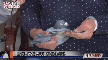 搜鸽网专访天津天体鸽业纪总