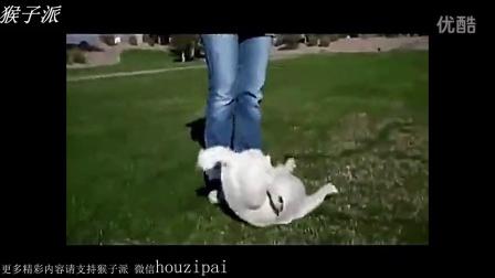【猴子派】小狗表演惊人绝技 最聪明的小狗就是它了