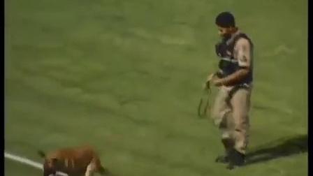 可爱的狗狗偷球