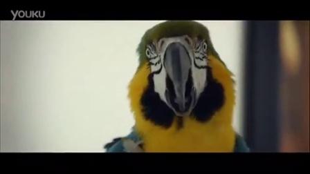 2015费德勒~瑞士日出电讯广告~教鹦鹉叫名字Roger