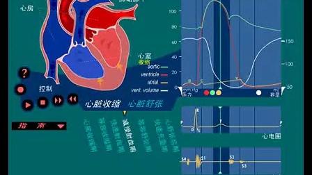 分享视频:心脏血流动态图