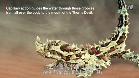X-BIONIC魔蜥科技 Thorny Devil Technology