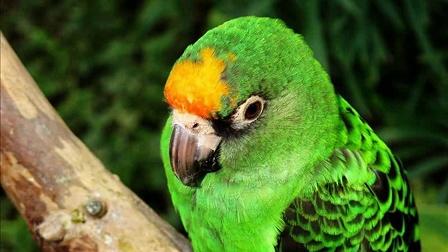 南宫地热博览园鹦鹉20150208