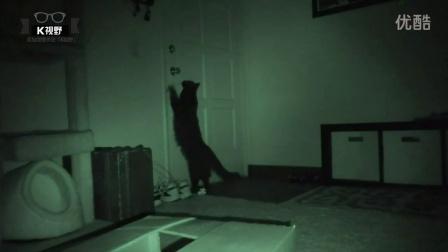 [K分享] 夜视实拍:你家猫晚上都在干啥?