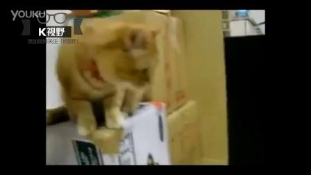 [K分享] 实拍!猫咪VS自动喂养机