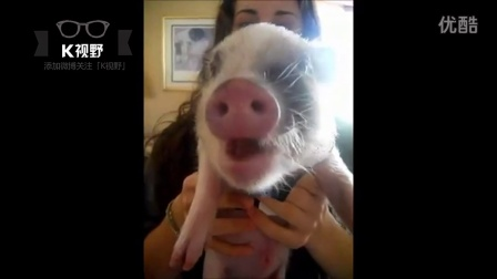 [K分享] 你敢信?宠物小猪吃薯片