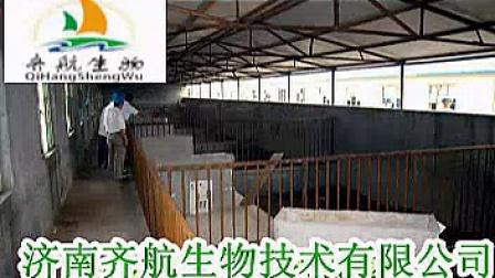 发酵床养猪技术 猪舍建设352x2722
