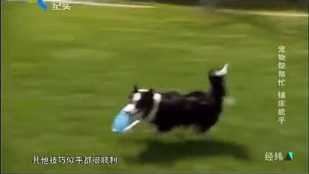 [经纬]20150312 宠物帮帮忙