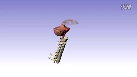 NRL-Simpleware Head Model
