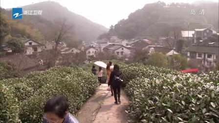 杭州:龙井新茶25日左右上市  价格略有提升 浙江新闻联播 150316