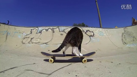 GoPro Didga the Skateboarding Cat (HD)