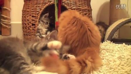 OtiCami Kittens X
