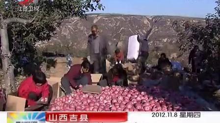山西吉县:苹果园里的半边天