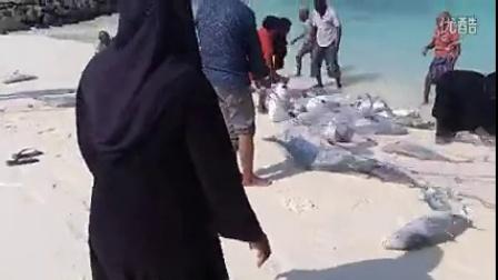 看看马尔代夫怎么捕鱼:原来在马代,鱼是战斗物种