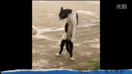 奶牛猫是喵星人神经病中的战斗机【每日一笑】2015.04.07
