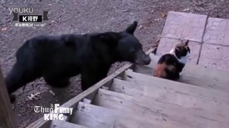 [K分享] 别摸我!实拍喵星人怒揍黑熊
