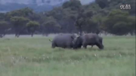 犀牛VS水牛到底谁更牛!超震撼的野生动物视频剪辑