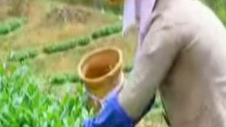 湖北十堰邵氏天然有机绿茶