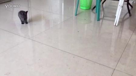 小灰兔的巴普洛夫训练