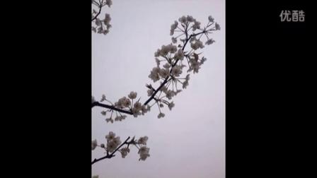 桃红梨白又一春