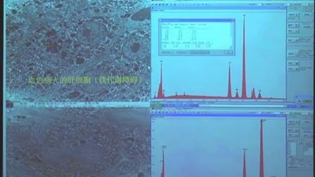 电子显微镜技术在生物医学中的应用(4)--西安交通大学核心设备论坛