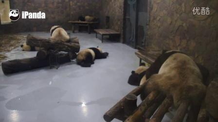 """幼年园""""七小""""回家——众熊皆睡,奥总裁霸气包场"""