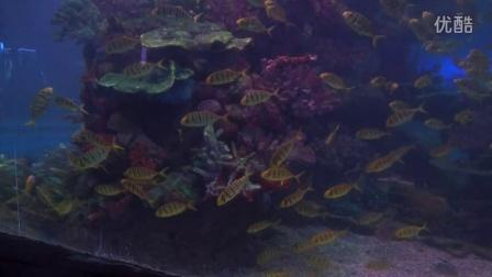 【旅游】走进海洋世界之鱼类三