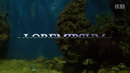 【旅游】走进海洋世界之鱼类四