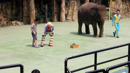 2015-4-28-郎家乐和大象-星星乐队-广州长隆野生动物园