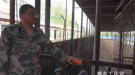 北京玉翅通达公棚新面貌