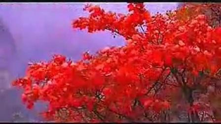 李炜《满山红叶似彩霞》古筝