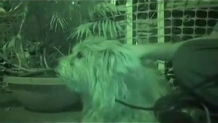 国外动物保护组织救助流浪狗4