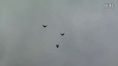Pigeons Nikolaevskie - Николаевские голуби май 2012