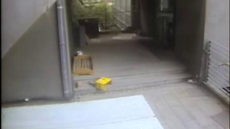 天津变态男残忍虐猫,太残忍了。(胆小慎入)