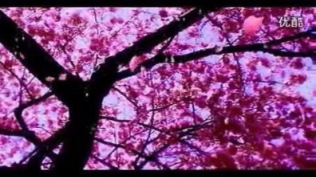 电视散文,音画 ——《前情旧爱落花飞》作者月泊枫桥