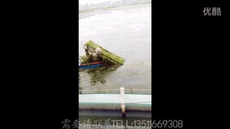 蟹塘水草割运一体运输割草机