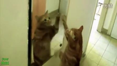 """""""搞笑动物与镜子""""搞笑视频集锦"""