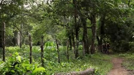 树林图片素材