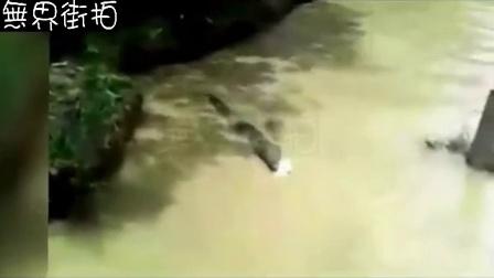 猫被无良扔入鱷鱼池,一番逃脱未果