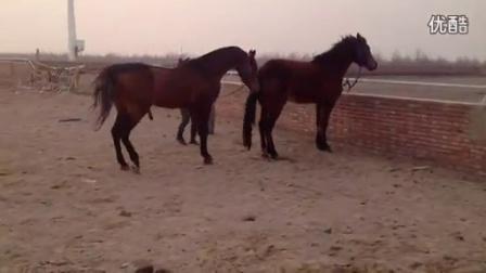 哪有卖马的_高清