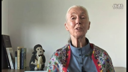 Dr. Jane Goodall Applauds Final Endangered Species Act Ruling for Chimpanzees